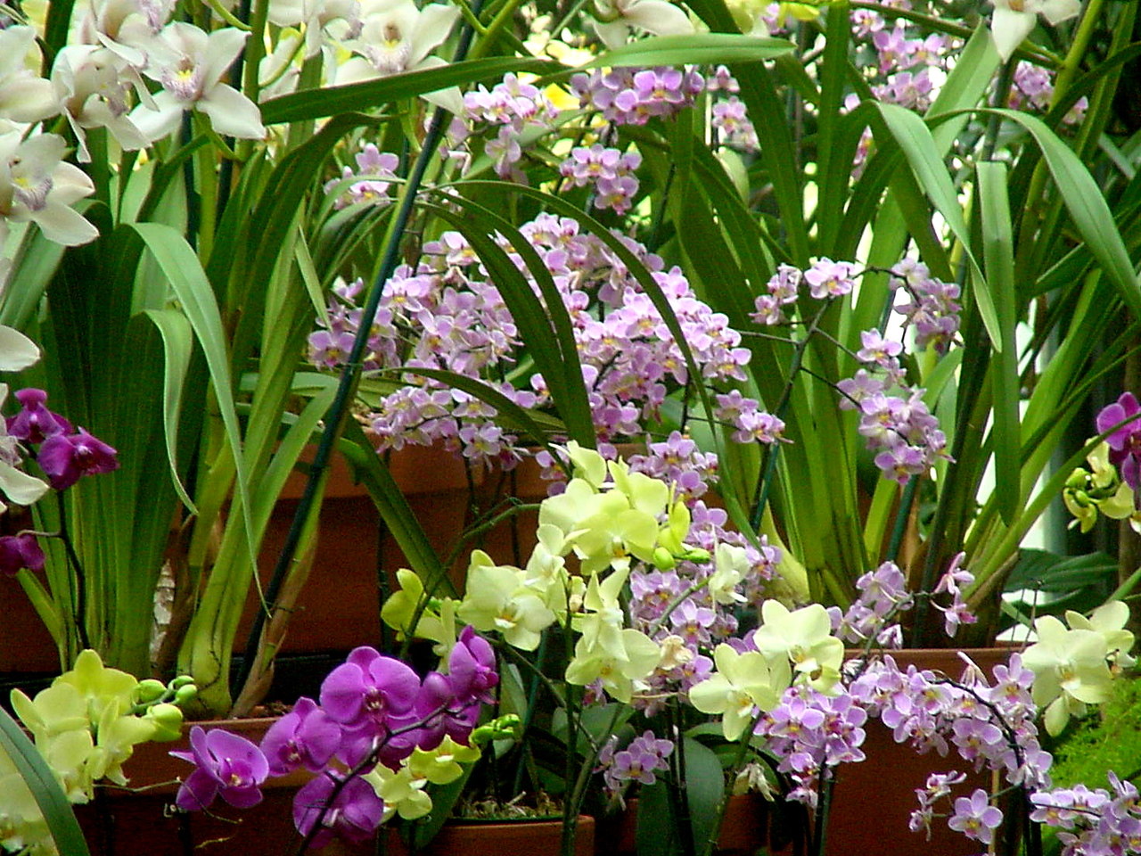 Orchids<br /> Winterthur, Delaware<br /> 2002