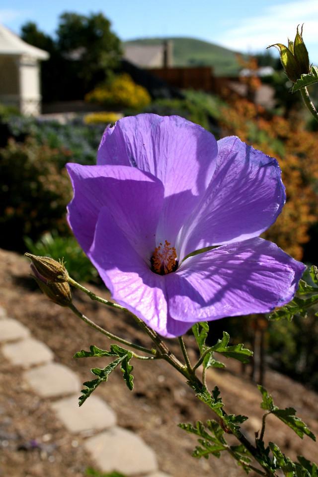 Flower<br /> Fairfield, CA<br /> 2008