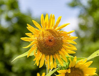 Sunflower Nebraska city