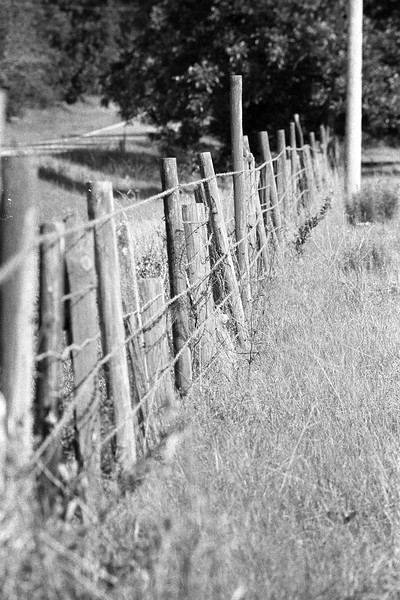 """<a href=""""http://www.nathangriffin.com/technical/camera/nikonfe2/"""" target=""""_blank"""">Nikon FE2</a> / 50-135mm f/3.5 AI-s w/2x teleconverter / Ilford HP5; Developed in XTOL at 74.5F for 5.75 minutes."""