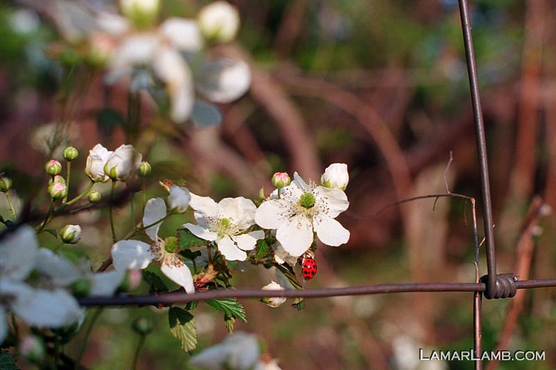 Spring colors in Vidalia, Georgia - Camera: Nikon F Photomic FTn; Lens: 35mm f/1.4 Nikkor-N Auto; Film: Kodak Ektar 100.