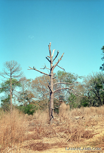Camera: Nikon F2SB with inoperative meter; Lens: 50mm f/1.4 Nikkor-S Auto; Film: Kodak Ektar 100.