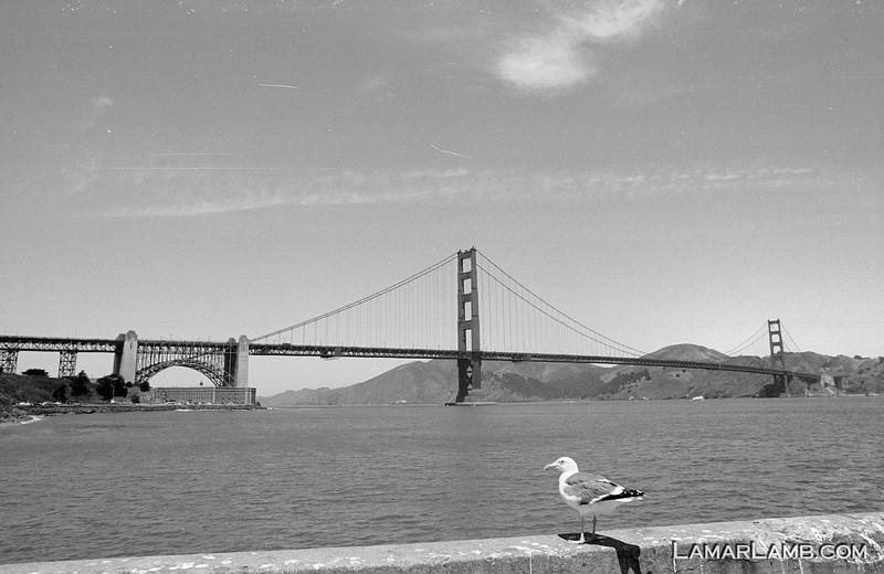 Golden Gate Bridge, San Francisco, CA.  Camera - Nikon FM; Lens - Nikkor 24mm f/2.8 AIs; Film - Ilford PanF Plus 50 developed in Kodak XTOL.  Scanned with Nikon CoolScan V ED.