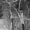 Kodak Tri-X in L-110 (E) - Taken with Leica IIIc & Jupiter 11
