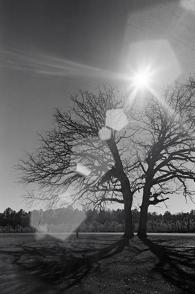 A little bit of lens flare.  20140120-01 XP2 Zorki-4-61 04