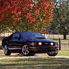 Kodak Ektar 100 - Mustang GT