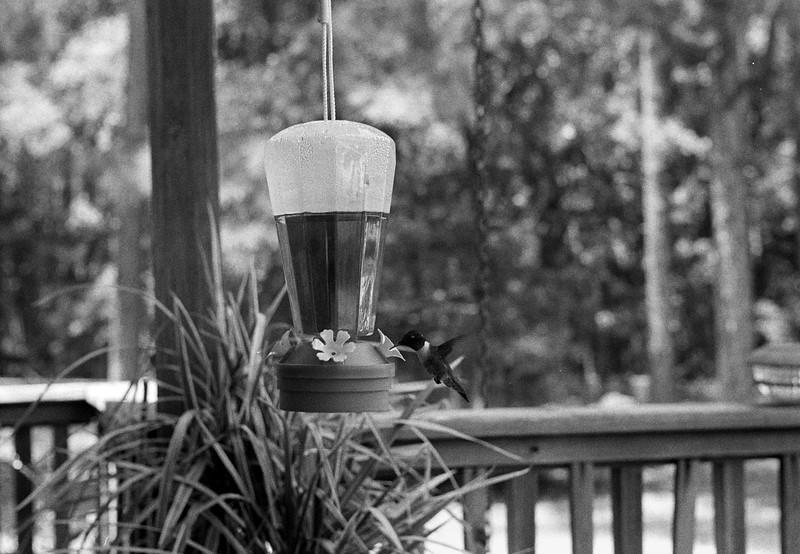 '38 Leica IIIb with Summitar 50mm f/2 - HP5 in HC-110