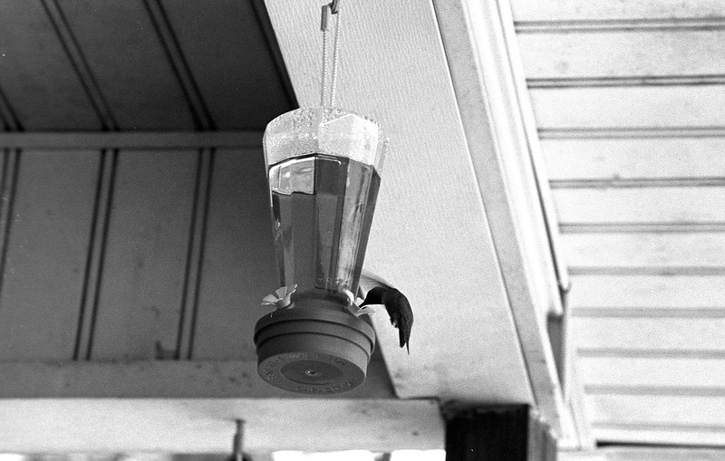 '50 Leica IIIc with Jupiter-11 Lens - Tri-X 400 Developed in HC-110
