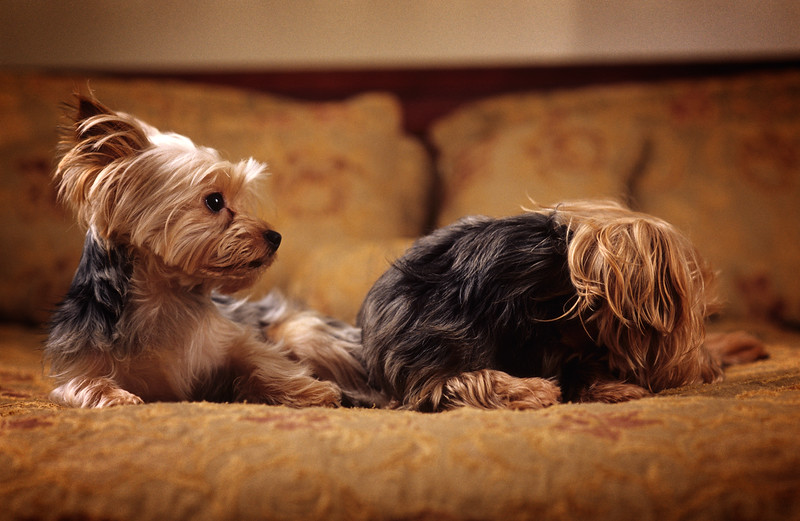 Kodak E100VS - Dogs