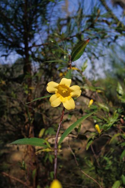 "<a href=""http://www.nathangriffin.com/technical/camera/nikonfe2/"" target=""_blank"">Nikon FE2</a> / Kodak Ektachrome E100G - Developed using the <a href=""http://www.kodak.com/global/en/professional/products/chemistry/e6Kit/e6Index.jhtml?pq-path=13815"" target=""_blank"" >Kodak Single Use Chemistry Process E6 kit.</a>"
