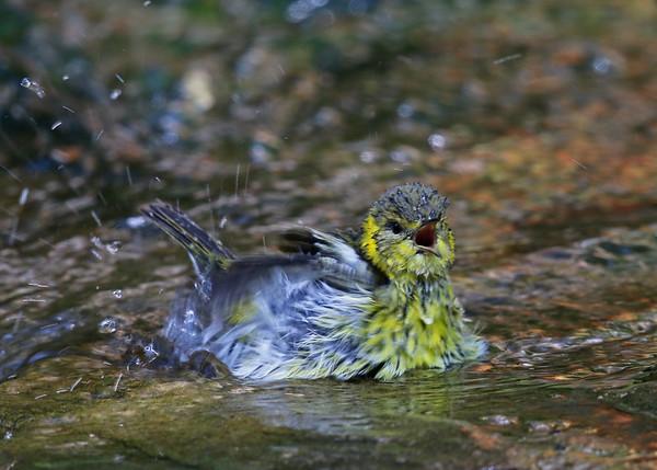 On Guyton's Pond
