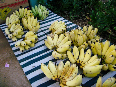 Apple Bananas