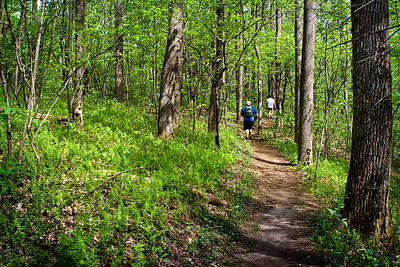Appalachian Trail, between Springer Mountain and Three Forks (Georgia) 05/01/11