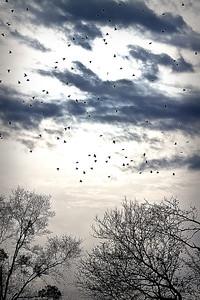 Birds122611a