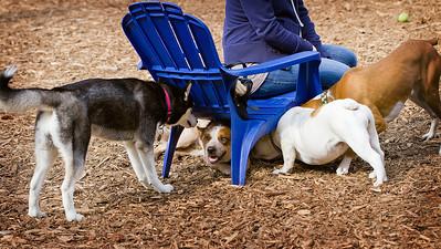 Peachtree City Dog Park