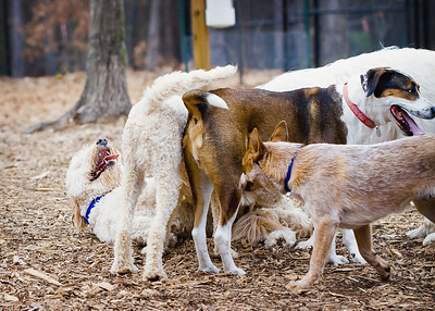 Peachtree City Dog Park
