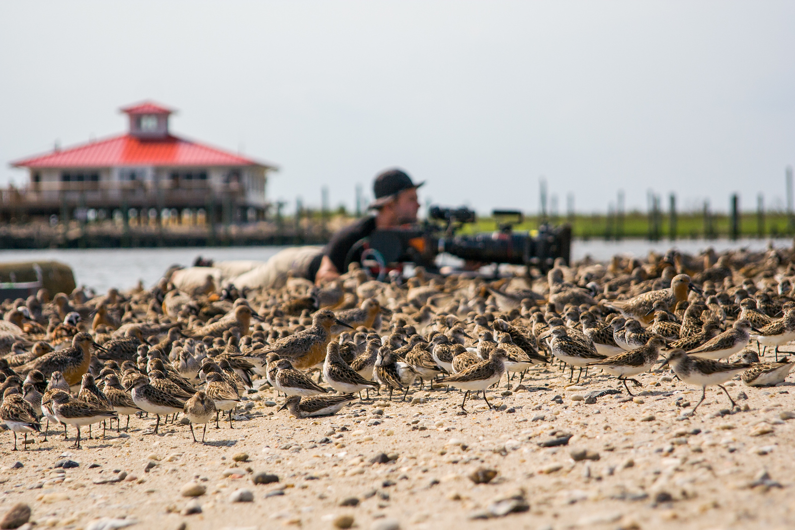 Filming with Sand Pipers