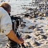 Filming the feeding frenzy and horseshoe crab spawn