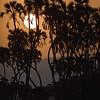 Sunset in Meru National Park, Kenya