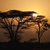 Sunset behind acacia trees in Meru National Park, Kenya