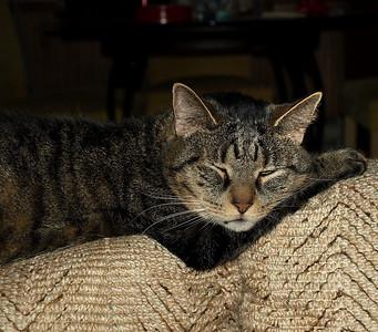 0400 The Cat