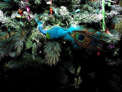 0220 Peacock