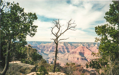 Southern Rim Canyon View with Tree