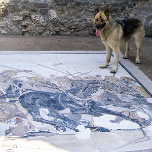 House of the Fawn - Mosaic of Alexander's Defeat of Darius
