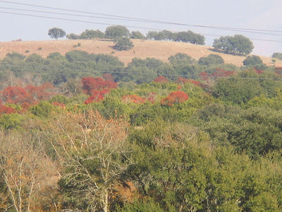 Fall colors TX hill country