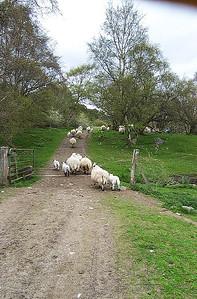 Leault Farms - Sheep Dog Show