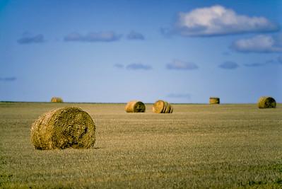 Montana Hay Rolls