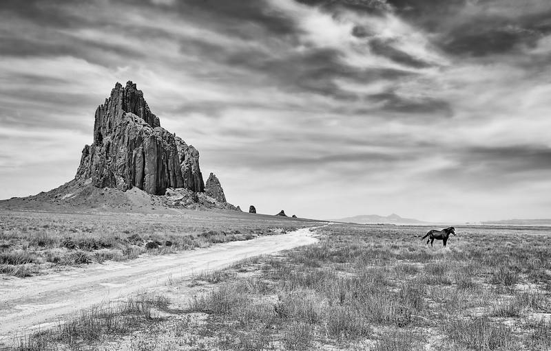 Shiprock New Mexico Wild Mustang