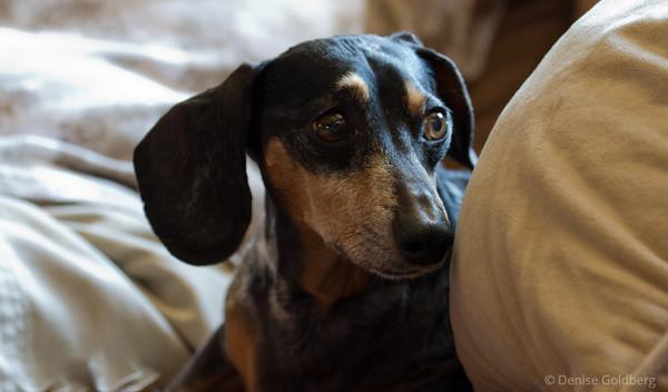 Bailey, looking