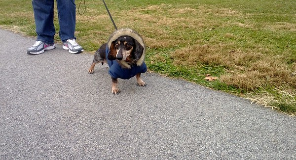 Bailey dressed for cold weather, ready to walk