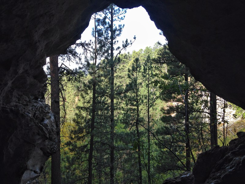 Cave view of Ponderosa Pine, Wyoming