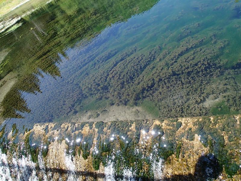 Trout pool reflections, South Dakota