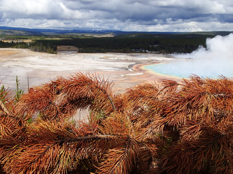 View of Grand Prismatic Spring, Yellowstone Wyoming