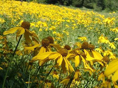 Late summer flowers, South Dakota