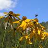 Pollen transport, South Dakota