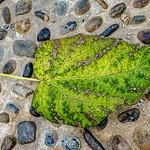 Leaf, Concrete, Stones