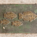 Four Fish on the Ground