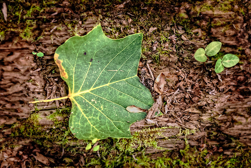 Green Leaf on Tree Wood