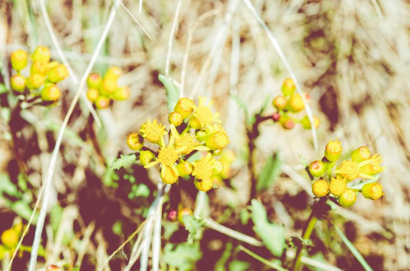 Grassland Blooms
