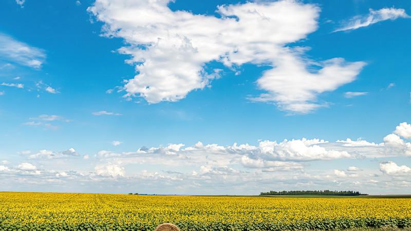 Sunflower Field and Straw Bale, Near Indian Hills in North Dakota