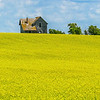 House of Yesteryear in Summer Canola Fields Near Indian Hills, North Dakota