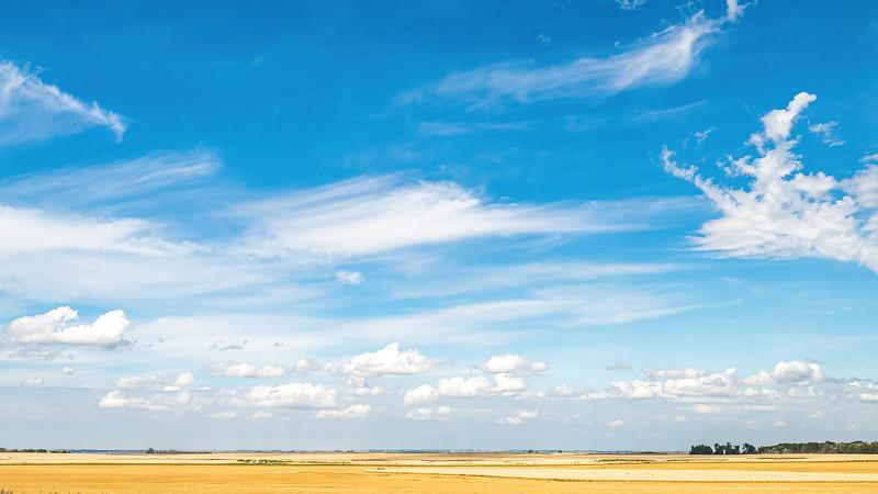 Wheat Field and Blue Summer Skies Near Indian Hills, North Dakota