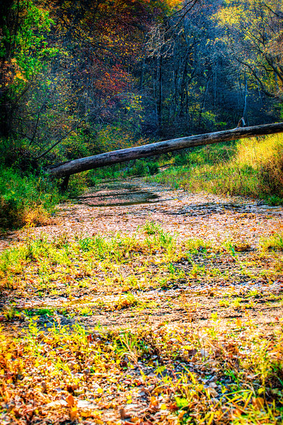 log across the stream
