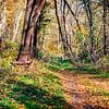 Tall trees and a narrow path