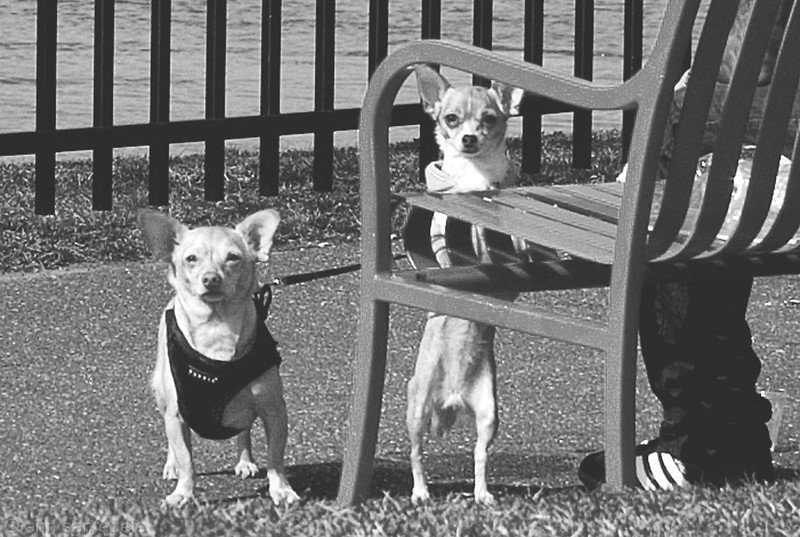 "Caption as you see fit.  ""Yo quiero taco bell "" is too lame.  These guys were fierce... this is cropped quite<br /> a bit - I got off one shot with the 18-55 and they started giving me what-for loudly at the shutter click.. owner was<br /> friendly but doggies must have smelled my cat."