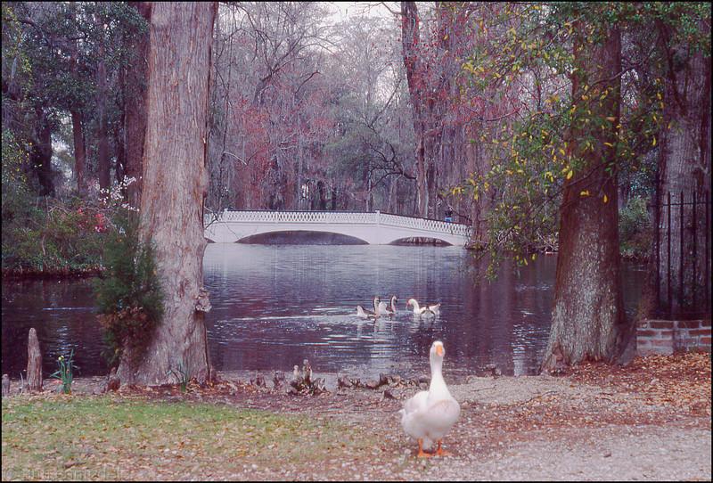 Magnolia Plantation Garden, South Carolina